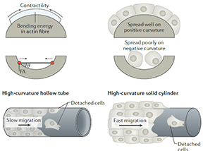 Material approaches to active tissue mechanics
