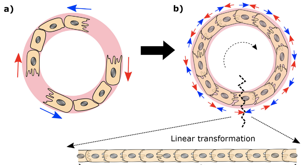 Mechanical plasticity in collective cell migration